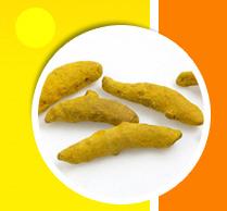 turmeric finger powder chillies coriander spices