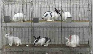 Galvanized Wire Mesh Panel For Making Rabbit Cages