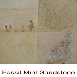mint fossils sandstone