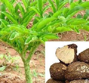 azadirachtin fertilizer