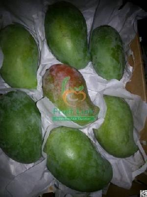 egyptian mango mabruka fruit link