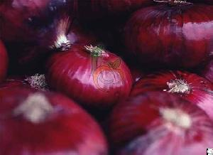 Egyptian Red Onions