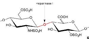 Heparinase I