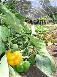 nitrogen fixing biofertilizer azospirillum organic fertilizer