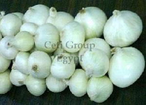 egyptian onion bulb