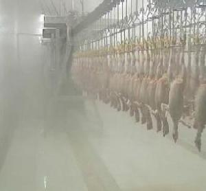 poultry slaughter equipment line