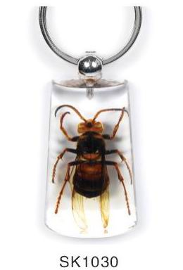 insect amber key chain