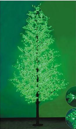led pine cypress tree