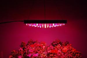 196 led panel grow light