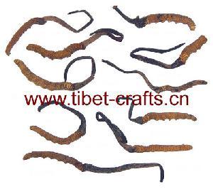 tibetan caterpillar fungus