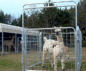 bowgates livestock panels