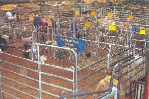 livestock pens