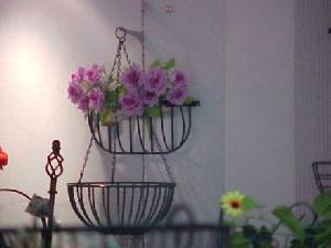 flower rack plant