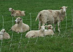 Hinge Joint Field Fence, Cattle Goat Fence