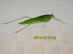 wire netting insect screen