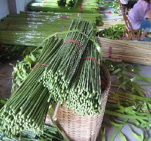 bamboo stick w plastic cover agriculture flower vegetable stand