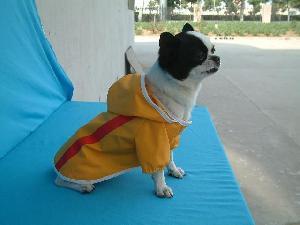 dog rain suit supplier