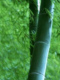 bamboo leaf antioxidant
