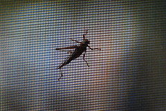 rolls window netting keep insects insect screen
