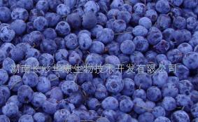 blueberry p e