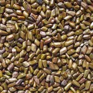 started exporting cassia tora botonical obtusifolia