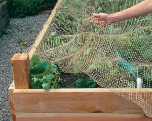 bird netting anti