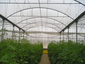 greenhouse telman greenhouses