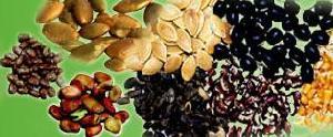 seeds exporters india