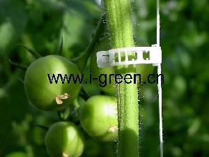 tomato ring tie