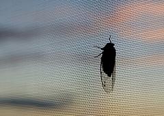 stainless steel window screen 14x14 bwg38