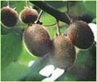 alpinia oxyphylla sports nutrition