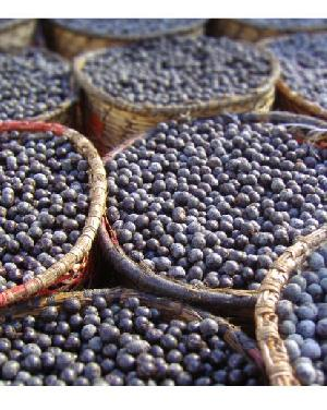 wholesale organic acai berry