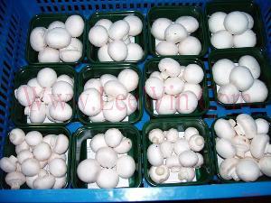 frozen mushroom