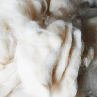 clipped wool