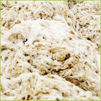 tannery wool