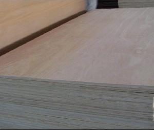 export agathis plywood