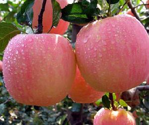 apple peel extract