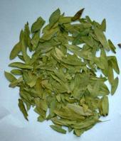 senna leaf p e