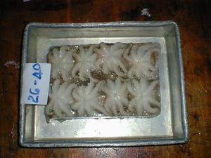 octopus 1 skin 2skin