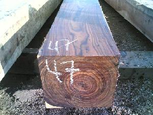 african sudamerica hardwoods softwoods