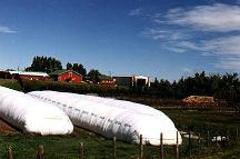 Supply Greenhouse Film, Mulch Film