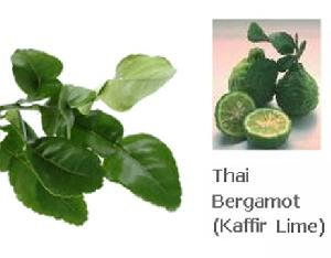 thai bergamot kaffir lime essential oil tester