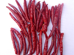 Indian Dried Red Chillies
