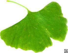 ginkgo biloba extract flavone glycosides 24 ginkgolides 6 export wordwide