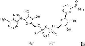Nicotinamide Adenine Dinucleotide Disodium 606-68-8 Comestic Raw Material Inci Disodium Nadh
