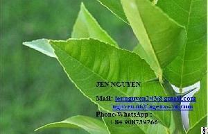 Lemon Leaf With Competitive Price From Vietnam