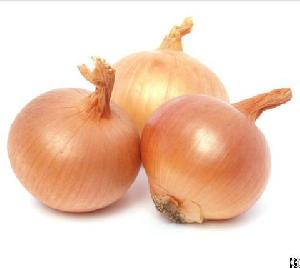 egyptian onion egyfruits export agricultural egypt