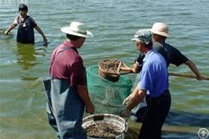 floating fish feed aquaculture extruder