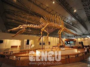 Spinosaurus Fossil Fp-269