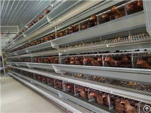 galvanized chicken cage poultry farm house